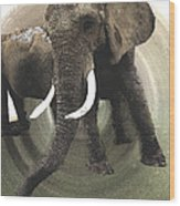 Elephant Awake Wood Print