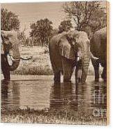 Elephant Bulls At Khwai River Wood Print