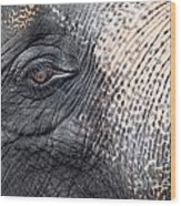 Elephant Close-up Portrait Wood Print