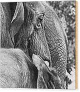 Elephant Ears Wood Print