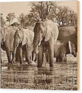 Elephant Family At Khwai Wood Print