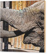 Elephant Feeding Time At The Zoo Wood Print