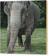 Elephant Greet Wood Print