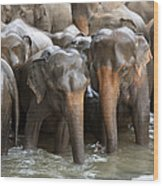 Elephant Herd In River Wood Print