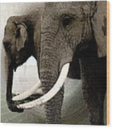 Elephant Meet Wood Print