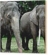 Elephant Meeting Wood Print