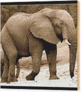 elephant of Botswana Wood Print