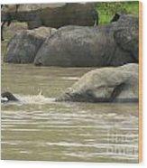 Elephant Pond Mole Park Reserve Ghana Wood Print