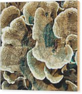 Elephant Skin Coral (pachyseris Sp.) Wood Print by Matthew Oldfield