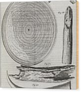Elephant Tooth Anatomy, 18th Century Wood Print