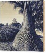 Elephantine Wood Print