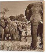Elephants At Khwai River Wood Print