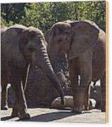 Elephants At The Pittsburgh Zoo Wood Print by Stacy Gold