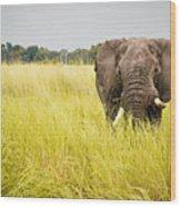 Elephants Of Botswana Wood Print