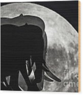 Elephants On Moonlight Walk Wood Print