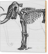 Elephas, Extant Cenozoic Mammal Wood Print
