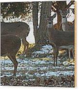 Eleven Deer Standing Wood Print