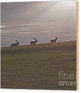 Elk 1. Wood Print