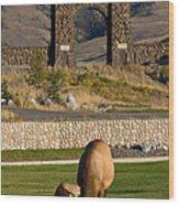 Elk At Yellowstone Entrance Wood Print