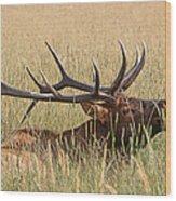Elk Bugle Wood Print