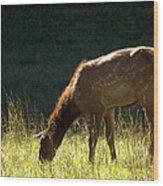 Elk Calf Wood Print