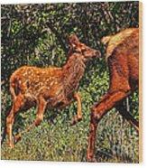 Elk Fawn Wood Print