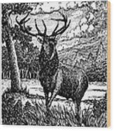 Elk From Glass Wood Print