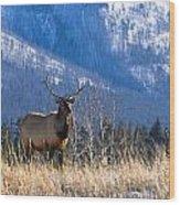 Elk In Forest, Banff National Park Wood Print