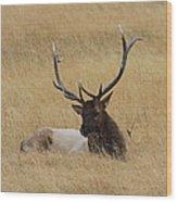 Elk In The Meadow Wood Print