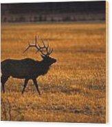 Elk In Yellowstone National Park Wood Print