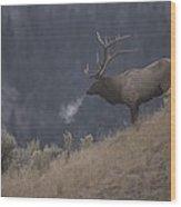 Elk Or Wapiti Bull On A Hillside Wood Print by Raymond Gehman
