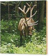 Elk Profile   Wood Print by Glenn Lawrence