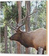 Elk Profile 2 Square Wood Print