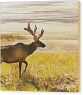 Elk Wanders On Yellow Landscape Wood Print