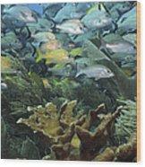 Elkhorn Coral With Schooling Grunts Wood Print