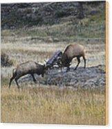 Elks Rutting Wood Print