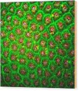 Emerald Coral Wood Print