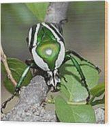 Emerald Fruit Chafer Beetle Wood Print
