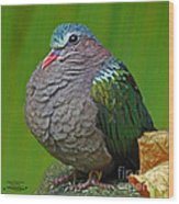 Emerald Ground Dove Wood Print