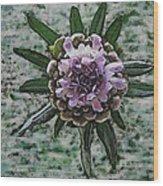Emerging Pincushin Wood Print