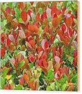 Emerging Red Wood Print