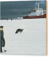 Emperor Penguins On Sea-ice, Antarctica Wood Print