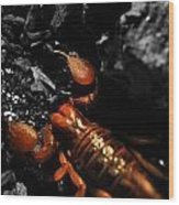 Emperor Scorpion 2.0 Wood Print