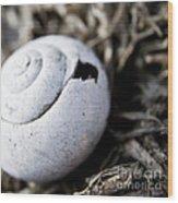 Empty Snail Shell Wood Print
