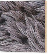 Emu Feathers Wood Print