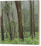 Australia Enchanted Forest Wood Print
