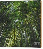 Enchanted Forest Haleakala National Park Wood Print