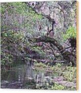 Enchanted Forrest Iv Wood Print