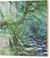Enchanted Leprechaun Forest Wood Print