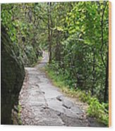 Enduring Path Wood Print